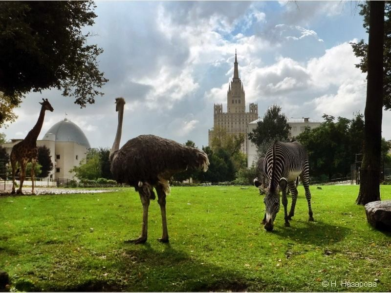 Moscow-Zoo-10