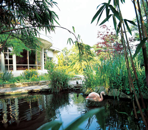 roofgardens-flamingo_pond